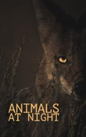 Animals at Night by Rachel Bladon book cover