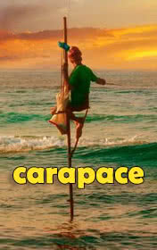Carapace by Romesh Gunesekera book cover